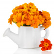 Bouquet of marigold flowers in watering can isolated on white — Stock Photo #29861559