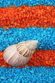 Shell on colorful crystals of sea salt background — Stock Photo