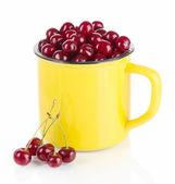 Sweet cherry cup isoliert auf weiss — Stockfoto