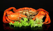 Boiled crabs isolated on black — Stock Photo