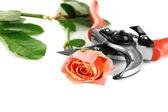 Garden secateurs and rose — Stock Photo