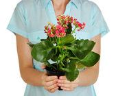 Hermosa flor en maceta en manos de niña aislado en blanco — Foto de Stock