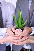 Equipo de negocios mantiene fresco brote verde closeup — Foto de Stock