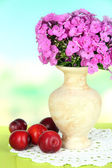 Beautiful bouquet of phlox in vase on table on light background — Stock Photo