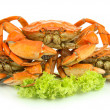 Boiled crabs isolated on white — Stock Photo #30047273