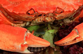 Boiled crab, close-up — Foto Stock