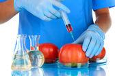 Forskare gör injektion i färsk röd tomat i laboratorium — Stockfoto