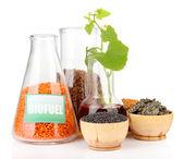 Fotografia concettuale di carburante biologico. isolato su bianco — Foto Stock