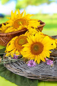 Beautiful sunflowers on wooden table, on bright background — Stock Photo