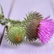 Thistle flower on wooden background — Stock Photo