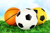 Sport balls, on green grass, on bright background — Stock Photo