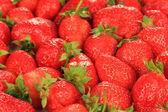 Fresh strawberry close up — Stock Photo