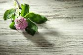 Fiore di trifoglio con foglie sul tavolo di legno — Foto Stock