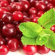 Stock Photo: Ripe red cranberries, close u