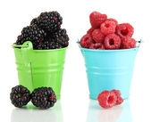 Ripe raspberries and blackberries in pail isolated on white — Stock Photo