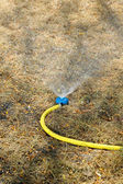 Sprinkler watering the lawn in garden — Stock Photo