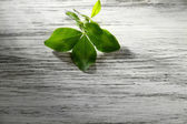 Clover leaf on wooden table — Stock Photo