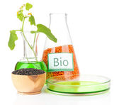 Conceptual photo of bio fuel from lentil. Isolated on white — Stock Photo