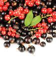 Grosella roja y negra, aislado sobre fondo blanco — Foto de Stock