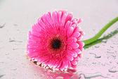 Beautiful pink gerbera flower, close up — Stock Photo