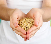 Wheat grain in female hands on natural background — Stockfoto
