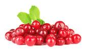 Canneberges rouges mûrs, isolés pentecôte — Photo