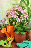 Beautiful flowers in pots on wooden table on natural background — Stock Photo