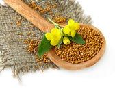 Semillas de mostaza en la cuchara de madera con flor mostaza aislado en blanco — Foto de Stock