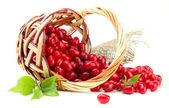 Hasır sepet, taze cornel meyveleri üzerinde beyaz izole — Stok fotoğraf