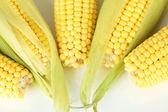 Crude corns isolated on white — Stock Photo