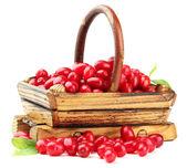 新鲜山茱萸浆果在木制的篮子里,在白色隔离 — 图库照片