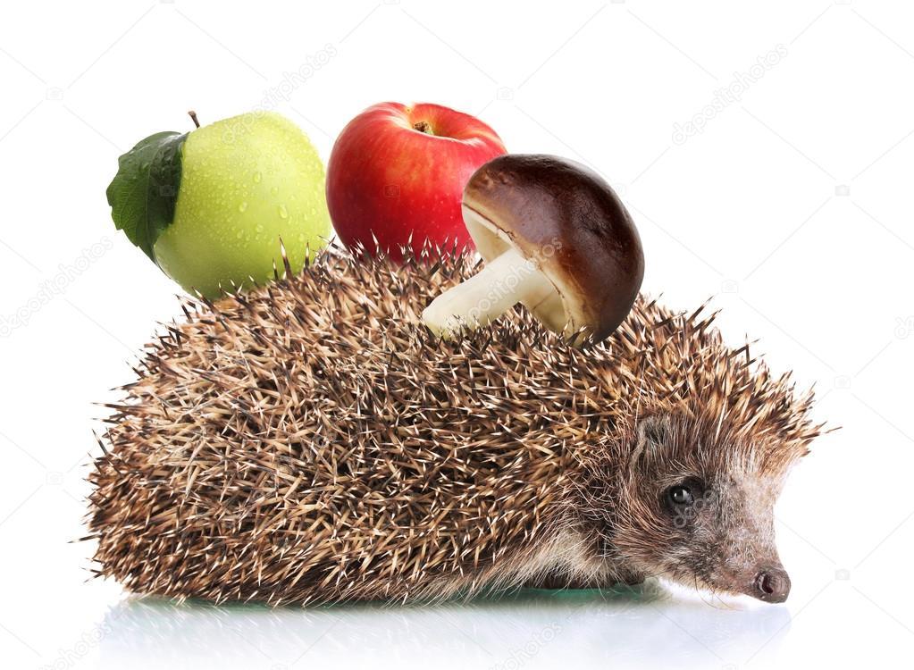 Ежик с яблоками и гриб, изолированные на белом фоне ...