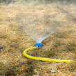 Foto Stock: Sprinkler watering the lawn in garden