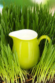Pitcher of milk standing on grass close up — Stock Photo