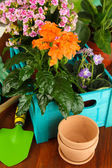 Beautiful flowers in pots on wooden table close-up — Stock Photo