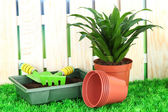 Beautiful flower in pot on grass in garden — Stock Photo