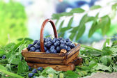 在草地上自然背景上木制篮子里的蓝莓 — 图库照片