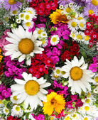 Beautiful bright flowers close-up — Stock Photo