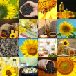 Collage with sunflower flowers, different seeds and oil — Stock Photo #30869427