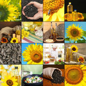 Collage with sunflower flowers, different seeds and oil — Stock Photo