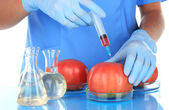 Scientists make injection into fresh red tomato in laboratory — Stock Photo