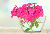 Beautiful bouquet of phlox in bowl on table on light background — Stock Photo