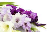 Piękne mieczyk kwiat na białym tle — Zdjęcie stockowe