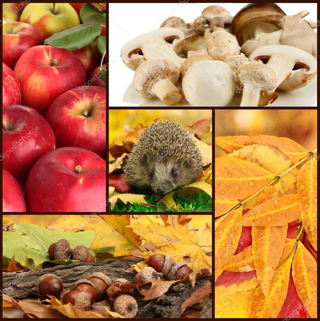 秋天的苹果, 橡子, 叶子, 蘑菇和刺猬的拼贴画