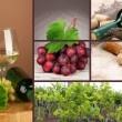Stock Photo: Collage of wine compositions