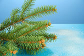 Beautiful fir tree, on blue background — Stock Photo