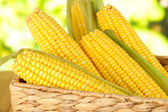Crude corns in basket on nature background — Stock Photo