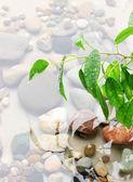Foglie verdi con riflesso nell'acqua — Foto Stock
