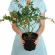 Beautiful flower in pot in hands of girl isolated on white — Stock Photo #31106697