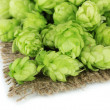Stock Photo: Fresh green hops, isolated on white